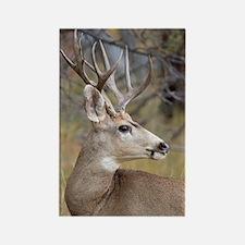 Cute Big buck Rectangle Magnet