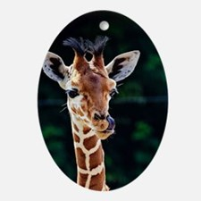 Sweet young Giraffe Oval Ornament