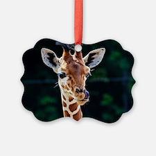 Sweet young Giraffe Ornament