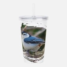 White Breasted Nuthatc Acrylic Double-wall Tumbler