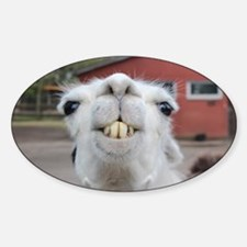 Funny Alpaca Llama Decal
