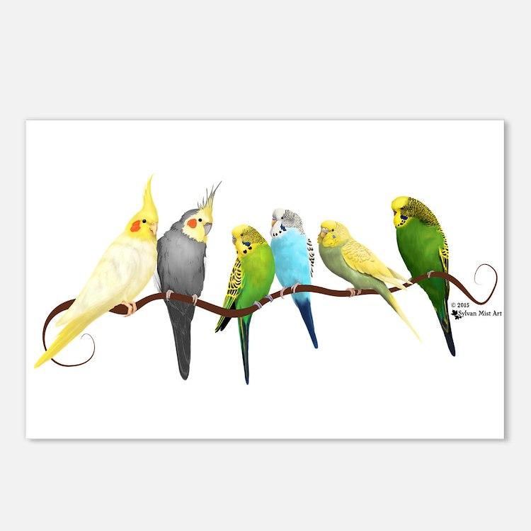 Parakeets & Cockatiels Postcards (Package of 8)
