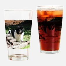 Newfoundland Sticker Drinking Glass