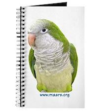 Quaker Parakeet - Journal