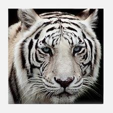 tiger1.jpg Tile Coaster
