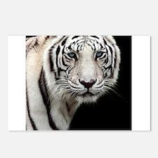 tiger1.jpg Postcards (Package of 8)
