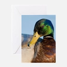 Male Drake Mallard Duck Greeting Cards