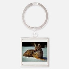 Coyote relaxing in the snow Keychains