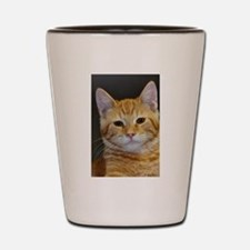 Cute Feline Shot Glass