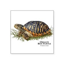 "Cute Turtles Square Sticker 3"" x 3"""