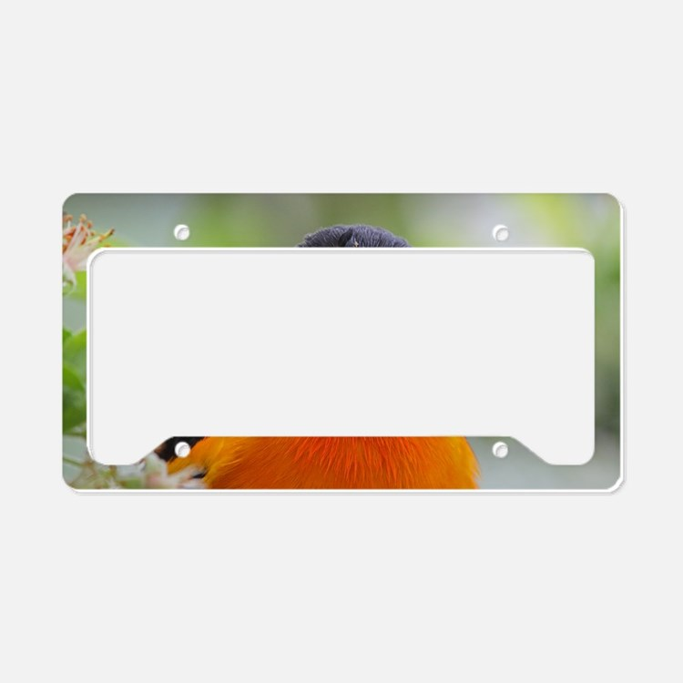Cute Birds baltimore License Plate Holder