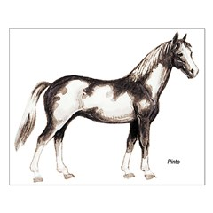 Pinto Horse Posters