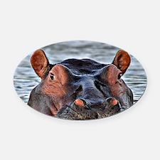Cute Hippopotamus Oval Car Magnet