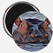 Cute Hippopotamus Magnet