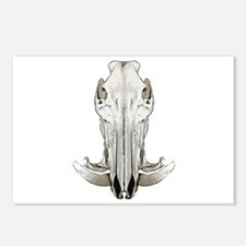 Hog skull Postcards (Package of 8)