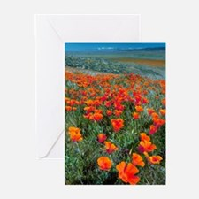 Cute Flora horticultural angiosperm angiosperms flower Greeting Cards (Pk of 20)