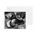 Giant Homer Pigeons Greeting Cards (Pk of 20)