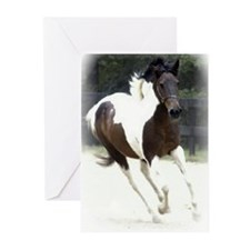Pinto Pony for the pony lover gift,photo by elpace
