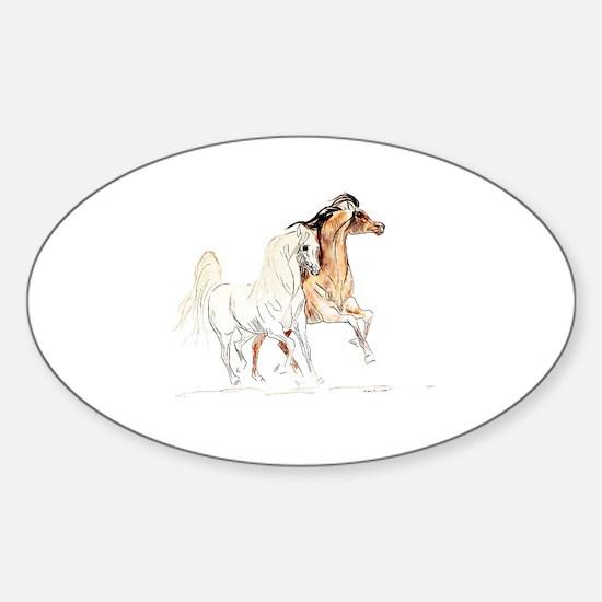 Arabian Horse Stallions Sticker (Oval)