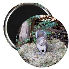 Cute Squirrel lovers Magnet
