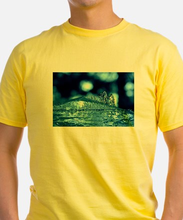Ice Forest T-Shirt