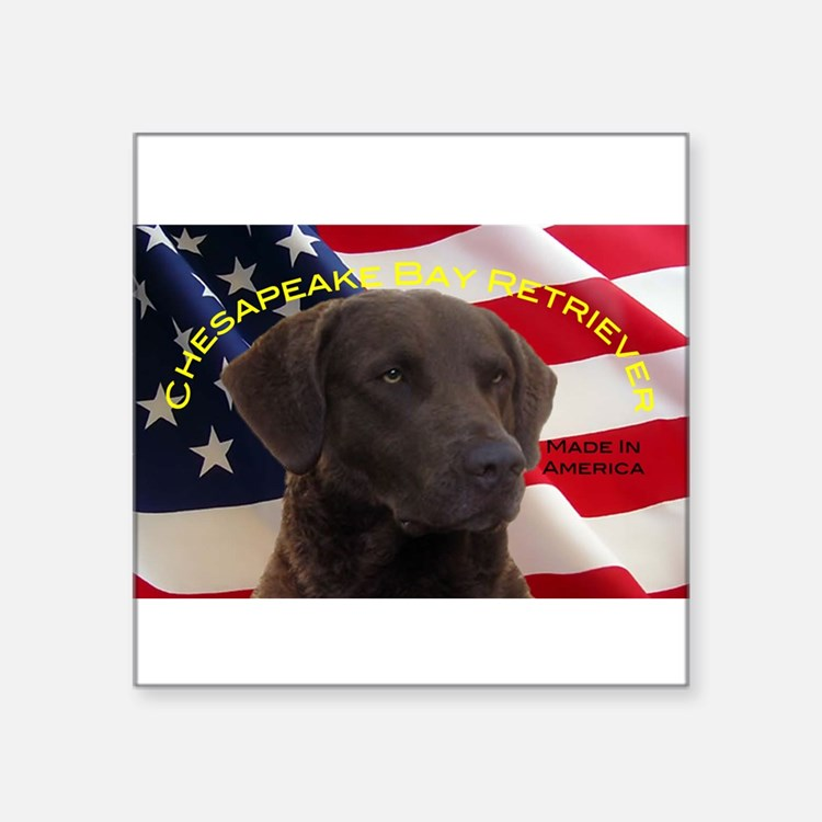 "Cute Chesapeake bay retriever Square Sticker 3"" x 3"""
