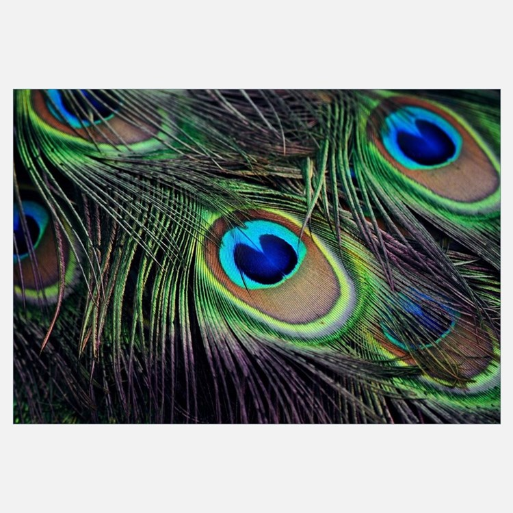 Feather Wall Art peacock feather wall art | peacock feather wall decor
