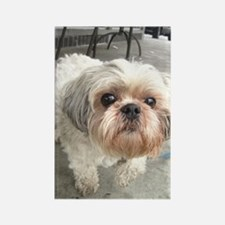 Funny Apso Rectangle Magnet