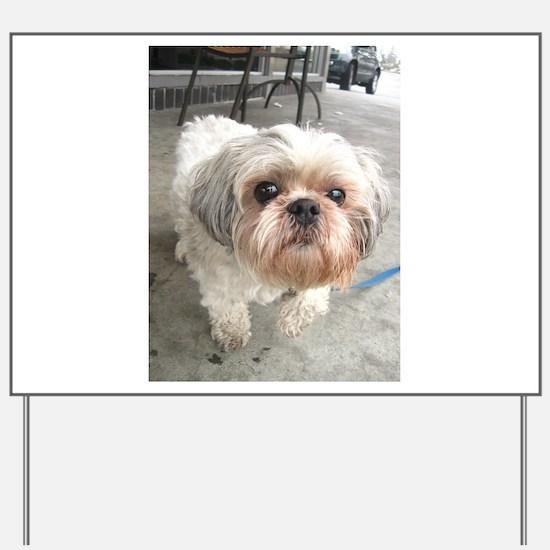 small dog at cafe Yard Sign