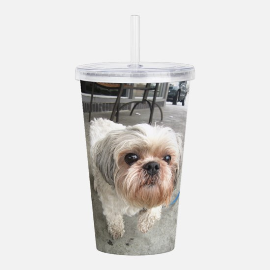 small dog at cafe Acrylic Double-wall Tumbler