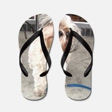 Unique Shih tzu Flip Flops