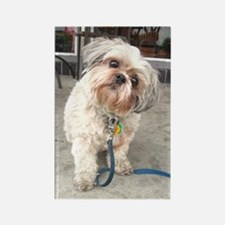 Cute Lhasa apso Rectangle Magnet