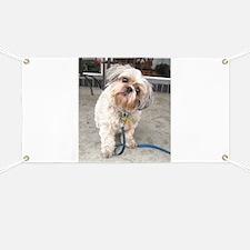 dog on leash at cafe Banner