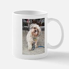 dog on leash at cafe Mugs