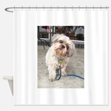 dog on leash at cafe Shower Curtain