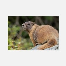 Cute Brown squirrel Rectangle Magnet