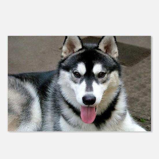 Alaskan Malamute Dog Postcards (Package of 8)
