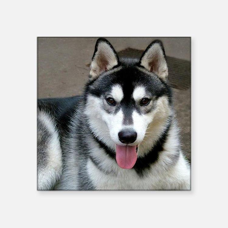Alaskan Malamute Dog Sticker