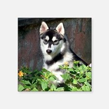 Alaskan Malamute Dog Outside Sticker