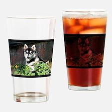 Alaskan Malamute Dog Outside Drinking Glass