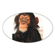 Cute Chimp Decal
