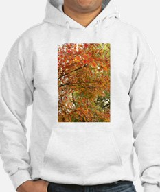 Japanese maple tree Hoodie