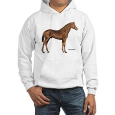 Thoroughbred Horse (Front) Hoodie