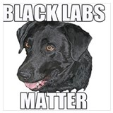 Black lab Posters