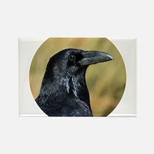 Moab Raven Magnets