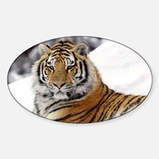 Tiger In Snow Decal