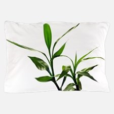 green lucky bamboo leaves. Pillow Case