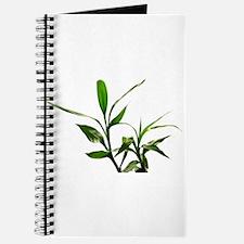 green lucky bamboo leaves. Journal