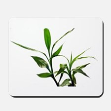 green lucky bamboo leaves. Mousepad