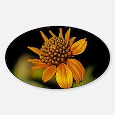 Big Yellow Wildflower in Texas Sticker (Oval)